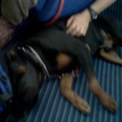 ...ועוד כלב כנעני :)