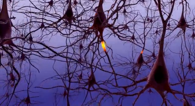 הצליחו לגדל תאי עצב ולרפא שיתוק